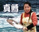 豊漁のお陰で最安値に挑戦中!天然真鱈(たら・タラ)1本(4k...