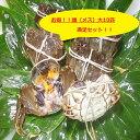 【本場中国産】上海蟹 メス 母 (大10匹満足セット!)11...
