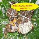 【本場中国産】上海蟹 メス 母 (特大10匹満足セット!)1...