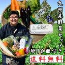 【送料無料】九州産の野菜セット たまごのおまけ付き
