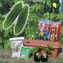 【送料無料】【 はじめてのグリーンカーテンセット 】ゴーヤ苗 2本付き栽培セット
