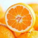 柑橘類の苗 【 はれひめ 2年生苗木 】 [ 雑柑 オレンジ...