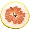 柑橘類の苗 【 紅まどか 1年生苗木 】 [ 雑柑 オレンジ かんきつ カンキツ 柑橘 苗 ]