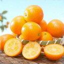 柑橘類の苗 【 ぷちまる 2年生苗木 】 [ 雑柑 キンカン かんきつ カンキツ 柑橘 苗 ]