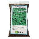 緑肥・景観用 種 【 白クローバー ( シロツメクサ ) 】 種子 小袋(250g) ( 種 野菜