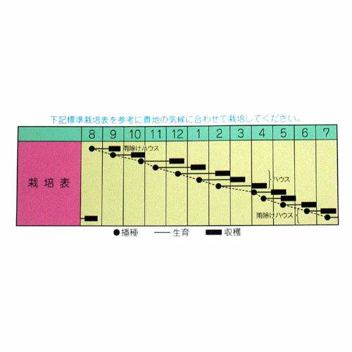 水菜 種 【 サラダ水菜 】 種子 小袋(約8...の紹介画像2