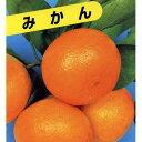 柑橘類の苗 【 青島温州みかん 1年生苗木 】 [ みかん ミカン 蜜柑 かんきつ カンキツ 柑橘 苗 ]