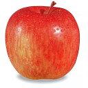 果樹苗 林檎 【 富士 ( ふじ ) 1年生苗 】 [ りんご リンゴ 果樹苗木 販売 ]