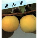 果樹苗 アンズ 【 平和アンズ 1年生 】 [ 杏 あんず 果樹苗木 販売 ]