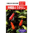 唐辛子 種 【島とうがらし】 2ml ( 種 野菜 野菜種子 野菜種 )