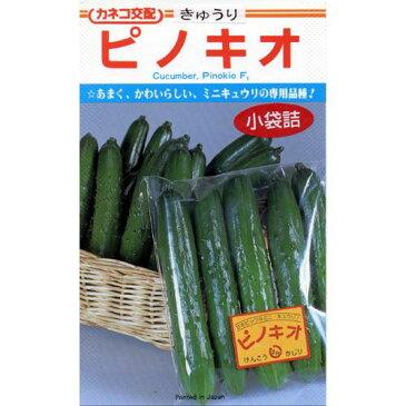 きゅうり 種 【ピノキオ】 20粒 ( 種 野菜 野菜種子 野菜種 )