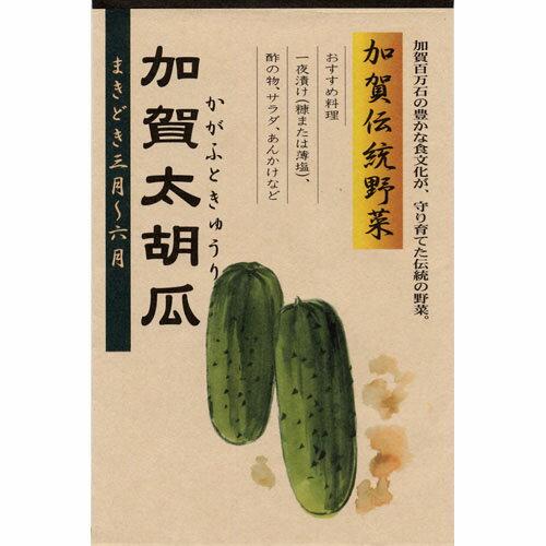 加賀太胡瓜(種)