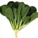 小松菜 種 【きよすみ】 小袋(約20ml) ( 種 野菜 野菜種子 野菜種 ) ★