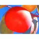 果樹苗 甘柿 【 貴秋 ( きしゅう ) 1年生苗 】 [ キシュウ かき カキ 果樹苗木 販売 ]
