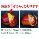果樹苗 栗 【 ポロ...