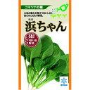 小松菜 種 【浜ちゃん】 小袋(約8ml) ( 種 野菜 野菜種子 野菜種 ) ★