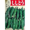 ししとう 種 【とうがらしししとう】 小袋 ( 種 野菜 野菜種子 野菜種 )