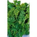 つみ菜 種 【 食用菜の花 】 種子 小袋(約8ml) ( 種 野菜 野菜種子 野菜種 )