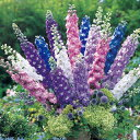 デルフィニウム 種 【 F1オーロラ ミックス 】 小袋 ( デルフィニウムの種 花の種 )