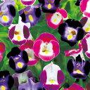 トレニア 種 【 ピッコロ ミックス 】 小袋(約200粒) ( トレニアの種 花の種 )