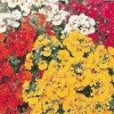 ネメシア 種 【 ラピン ミックス 】 1000粒 ( ネメシアの種 花の種 )