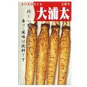 ごぼう 種 【大浦太】 小袋(約10ml) ( 種 野菜 野菜種子 野菜種 )