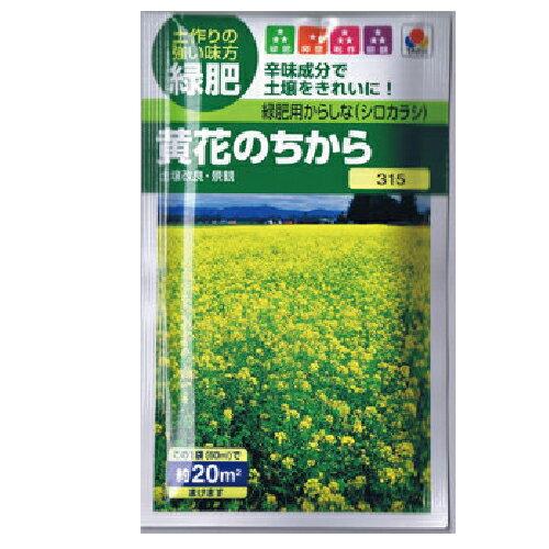 緑肥・牧草種緑肥用からしな黄花のちから(からしな)種子小袋(60ml)(種野菜野菜種子野菜種)