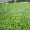 緑肥・牧草 種 【 えん麦 ヘイオーツ 】 種子 1kg ( 種 野菜 野菜種子 野菜種 )