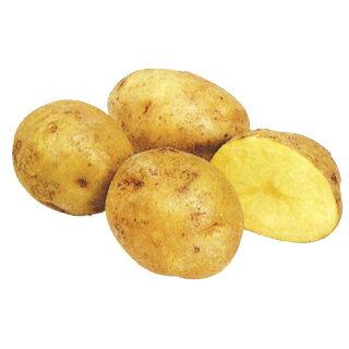 じゃがいも 種芋 【予約】【 キタアカリ 1kg 入り】[馬鈴薯 ばれいしょ 種イモ 栽培 販売]