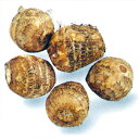 里芋 石川早生 種芋 1kg(15〜20個入り)