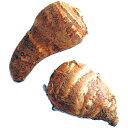 里芋(さといも) 【予約】【唐の芋(エビ芋)】 種芋 300g(2〜3個入り)[ サトイモ タネイモ 栽培 通販 販売 ]