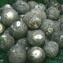 里芋 三河丸芋 種芋 1kg(15〜20個入り)