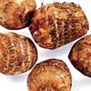 里芋(さといも) 【予約】【絹ひかり】 種芋 500g(7?10個入り)[ サトイモ タネイモ 栽培