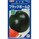 スイカ 種 【ブラックボール2】 DF ...