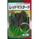 【 ベビーサラダレッドマスタード 】 種子 小袋(約20ml) ( 種 野菜 野菜種子 野菜種 )