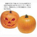 かぼちゃ 種 【ハローウィーン】 50ml ( 種 野菜 野菜種子 野菜種 )