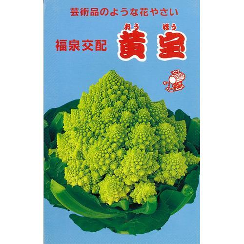 カリフラワー種花ヤサイ種子10ml(種野菜野菜種子野菜種)