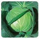 キャベツ 種 【 YRあおば 】 種子 20ml ( 種 野菜 野菜種子 野菜種 )