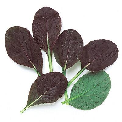 ベビーリーフ 種 【 レッド小松菜 】 種子 1L ( 種 野菜 野菜種子 野菜種 ) ◎中原採種のベビーリーフシリーズ◎