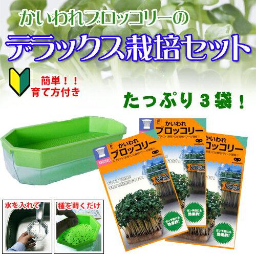 ① ブロッコリースプラウト デラックス栽培セット