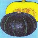 かぼちゃ 種 【ジェジェJ】 16粒 ( 種 野菜 野菜種子 野菜種 )