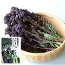 紫茎ブロッコリー 種 【 スカーレットダンス 】 小袋 ( 種 野菜 野菜種子 野菜種 )