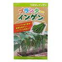 つるなし菜豆 種 【 プランターインゲン 】 小袋(30粒) ( 種 野菜 野菜種子 野菜種 )