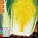 白菜 種 【 CR威風GOGO 】 ペレット5千粒 ( 白菜の種 )