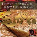 北海道 オホーツク産 堅毛ガニ姿(大型サイズ)1杯 660g前後【10P03Dec16】