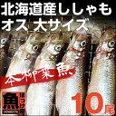 北海道(広尾産)ししゃも オス 大サイズ 10尾 【本ししゃ...