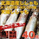 【送料無料】北海道(広尾産)ししゃも 大メス20尾 大オス2...
