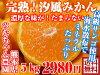オレンジのイメージ