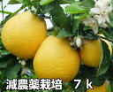 河内晩柑 7k 減農薬 栽培 発祥の地 熊本★ ジューシーオレンジ ★果物ソムリエが作る 送