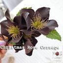 ショッピングクリスマスローズ 『クリスマスローズのコサージュ』 -ケース付き- 【コサージュ】【アートフラワー】【造花】【ギフト】【卒業】【入学】【結婚式】【ブラックフォーマル】【発表会】